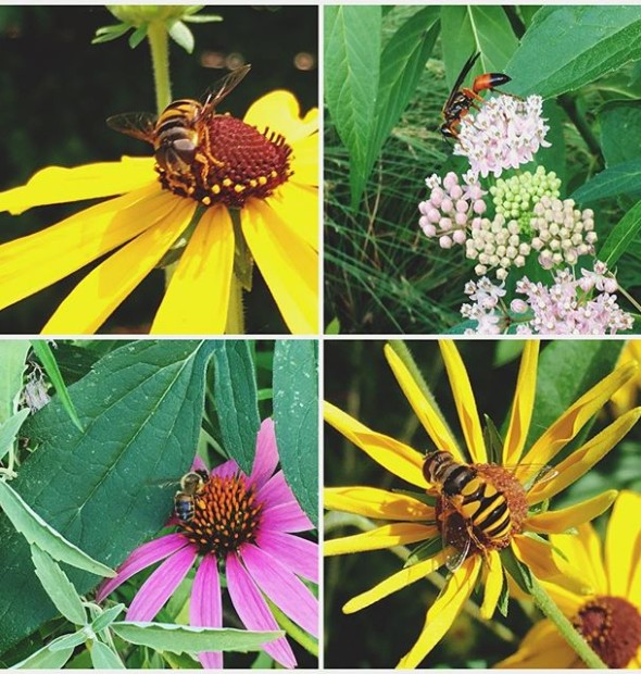 #Pollinators. Somewhere between 75%-95% of all flowering plants on the earth need help with pollination. Providing habitat for these critical critters is the number one thing we all can do to aid in supporting their important role.