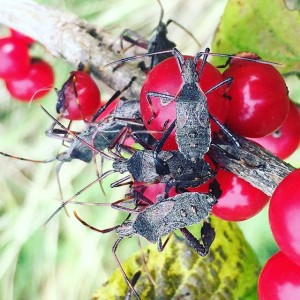 It's #Sunday. Hope you're getting together with all your #bugs. . . . .
