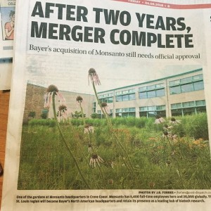 One of our longstanding clients has been in the news an awful lot lately... We are excited to see what the new chapter holds for this St Louis stalwart and are honored that the @stltoday chose a photo featuring one of the many sustainability initiatives on the @monsantoco Creve Coeur campus we have helped them to implement. The raingarden featured converted nearly 18,000 square feet of traditional turf lawn to native prairie, infiltrates 3,381 gallons of storm water, installed over 2,000 pollinator-loving species of native plants and utilized innovative soil management to save over 600 gallons of diesel fuel in the installation process. We have enjoyed our leading-edge campus management work with Monsanto over the years and look forward to continuing our collaboration with @bayer4crops [ ]